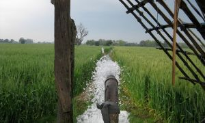 Leveled field being irrigated in eastern Uttar Pradesh, India.