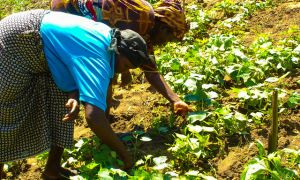 Kenyan women farmers in the field.