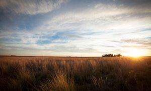 Regenerated rangeland in Bahia Blanca, Argentina