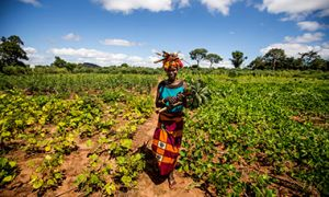 Woman farmer stands in planted field