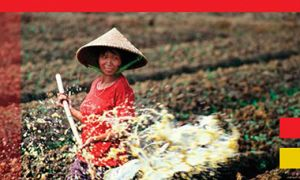 IFPRI food policy research with China - crop of cover image