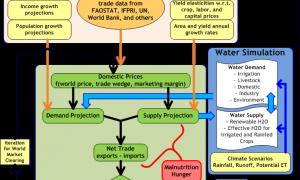 IMPACT model figure 1