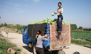 Two people loading a truck with vegetables
