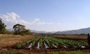 Cultivated Field in South Africa