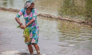 Smiling woman holds crops in flooded field