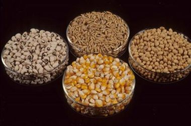 Is the global seed industry Investing in smallholders