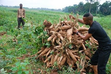 impact of agriculture credit on agriculture productivity Credit, agriculture for impact agricultural extension is the application of scientific research and knowledge to agricultural practices through farmer education  generally, agricultural.