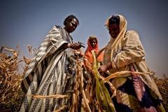 Farmers inspect failed crops in Senegal.