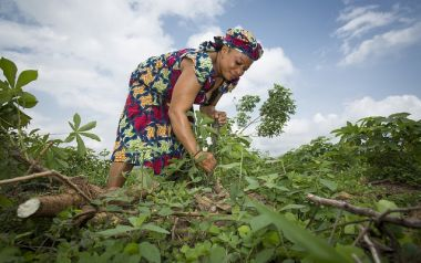 Gender gap shrinks in agricultural research in Africa South of the Sahara