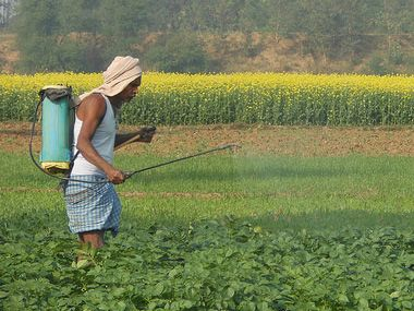 Indian farmer fertilizes fields in Nalanda District, Bihar.