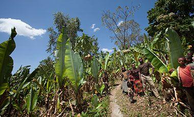 Farmers in Ethiopia