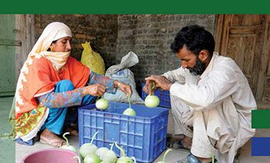 IFPRI Food policy research in Pakistan - crop of cover image