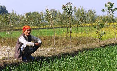 Farmer sitting on the edge of a field. Dhanusha District, Nepal.