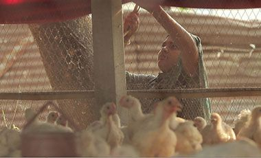 A successful woman chicken farmer in Bangladesh