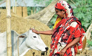 Woman with dairy cow in Bangladesh