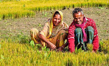 Farmers work together in Khulna, Bangladesh, 2014.